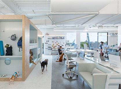 你见过与宠物一起上班的办公室吗